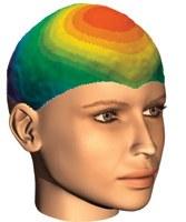 erotic brain