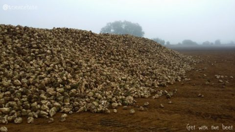 sugarbeet-mountain