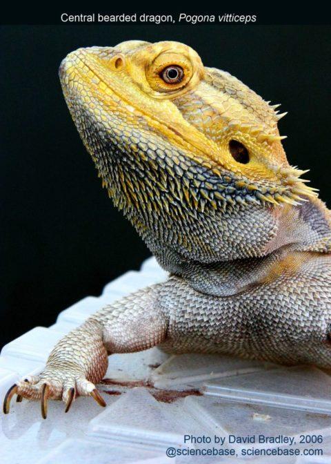 summer-fair-lizard-2006