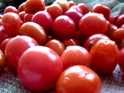 Tomatoes grown and photographed by David Bradley