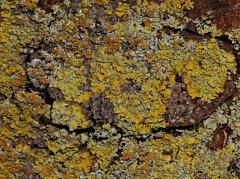 Mosses lichens